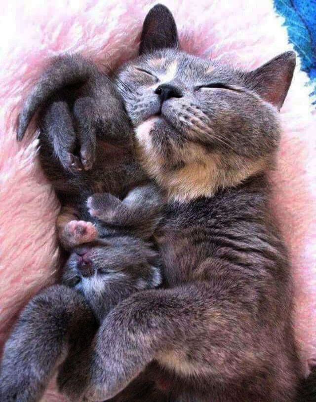 Cat Delivering Kittens Video Cats And Kittens For Sale On Gumtree