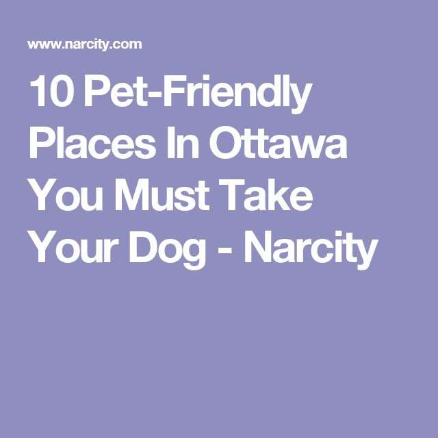 10 Pet-Friendly Places In Ottawa You Must Take Your Dog - Narcity