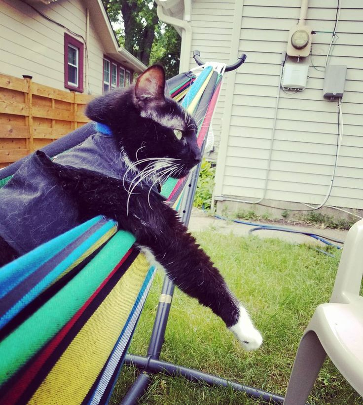 """This little guy knows the meaning of """"TGIF""""  #catsofinstagram #instacat #hammock #hammocklife"""