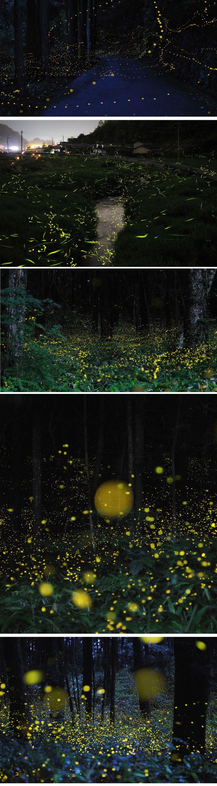 O fotógrafo japonês Karo Yuki criou um ensaio fotográfico capturando vagalumes com a exposição da câmera aberta, captando o rastro de suas luzes.