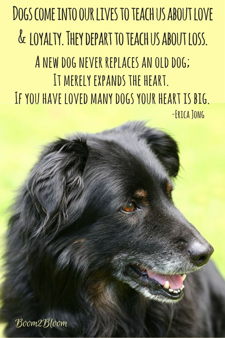 Losing A Dog Quotes Best 25 Dog Loss Quotes Ideas On Pinterest  Dog Loss Pet Quotes