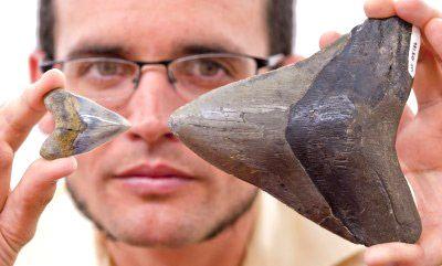 SHARK WATCH: Megalodon Giant Shark Documentary |