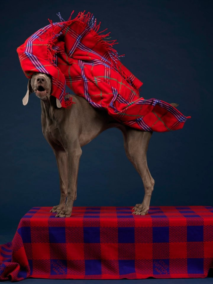 """MAN ABOUT TOWN """"DOGGY STYLE"""" FT. PHOTOGRAPHER WILLIAM WEGMAN STYLE BY SAMUEL FRANCOIS"""