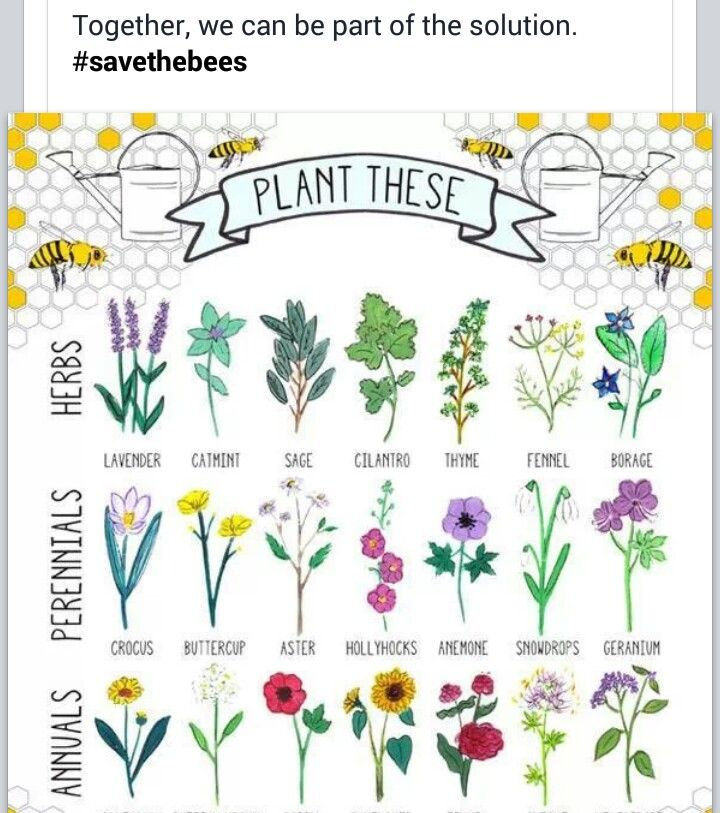 Hannah Rosengren: U201c Plant These To Help Save Bees: 21 Bee Friendly Plants.  Learn More Here! By Hannah Rosengren, U201d