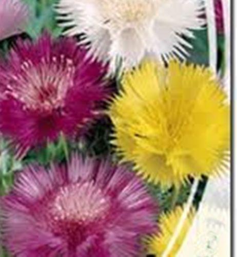 Seeds-Sweet-Sultan-Mix-Centaurea-moschata-Oragnic-Wildflower-Mix