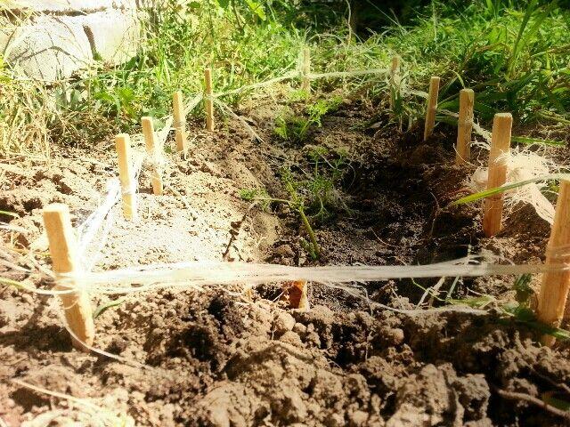 Delimitacion para tus plantas con palitos de paletas