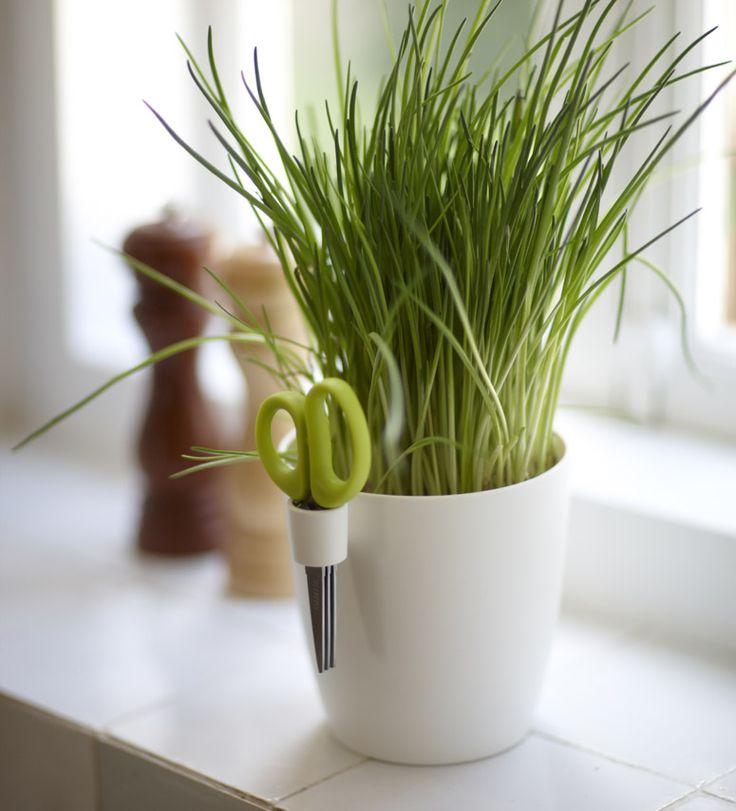 This is absolutly genius.   Simplistic minimal beauty with a purpose. Designer: Bas van der Veer Product: Brussels Herbs