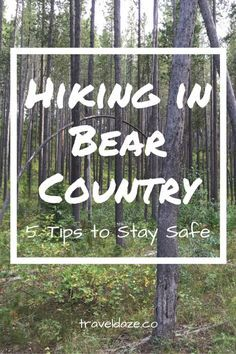 Hiking in Bear Country: 5 Tips to Stay Safe // If you're planning to hike near bear habitats, follow these 5 tips to stay safe