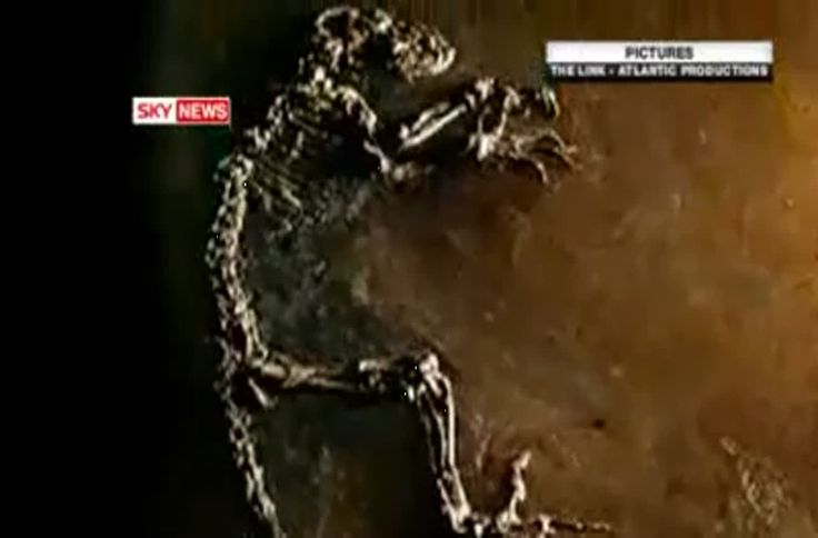 """This report from the UK's """"Sky News Network"""" details the finding of """"Ida"""", the so-called """"missing link"""" of human evolution. Darwinius, or """"Ida"""", was found near the village of Messel in Germany. The finding of the fossil hasn't quelled the evolution debate."""