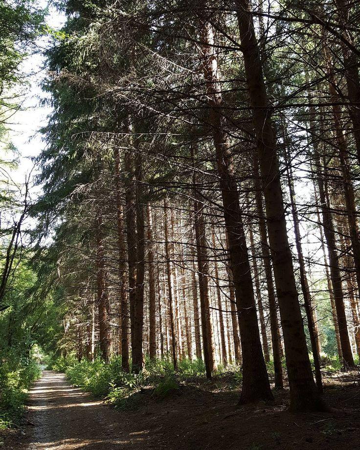 10km avanti e indré per i sentieri sul Monte Amiata e avrei bruciato solo 590 calorie?  #hiking #monteamiata #inthewoods #vsco #nofilter