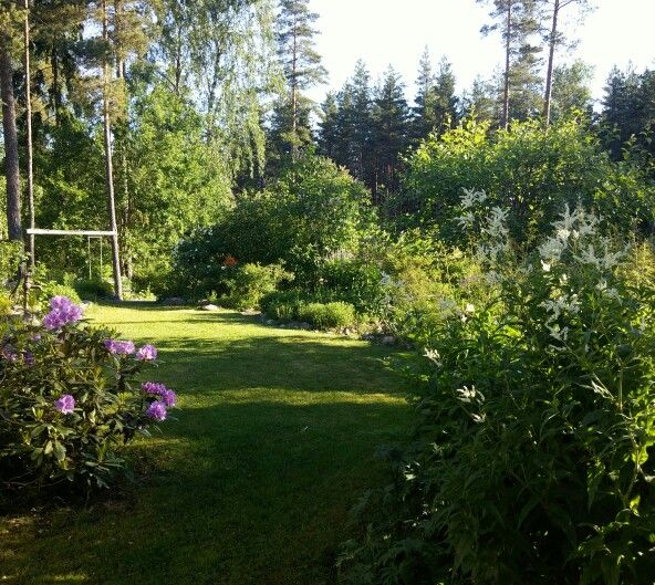 Sunshine in the morning/ my garden.