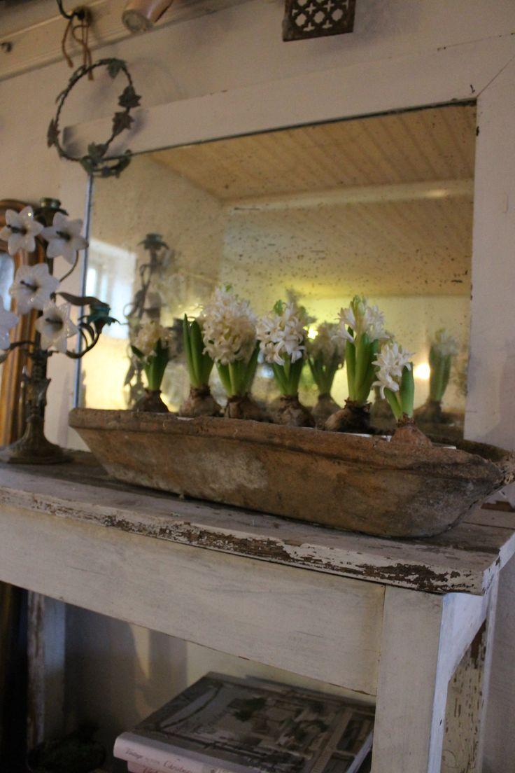 lot of hyacinth in an old baking basket