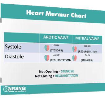 Heart Murmurs Guide