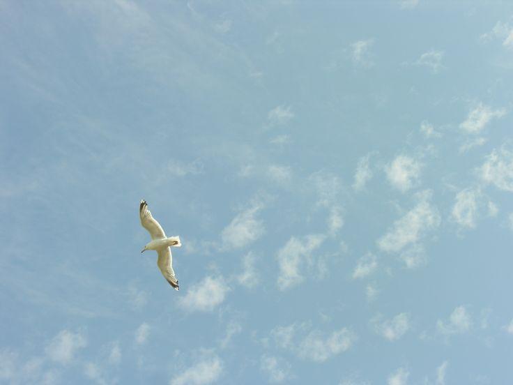 Un gabbiano vola nel cielo di Saint Malo (Bretagna, Francia)