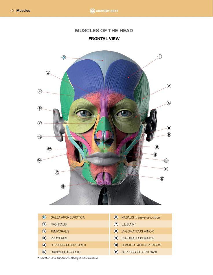94 besten Anatomy practice Bilder auf Pinterest | Menschlicher ...