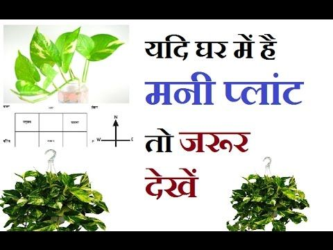 Vastu Tips For Money Plant II Learn Astrology in hindi II Dhan prapti k ...