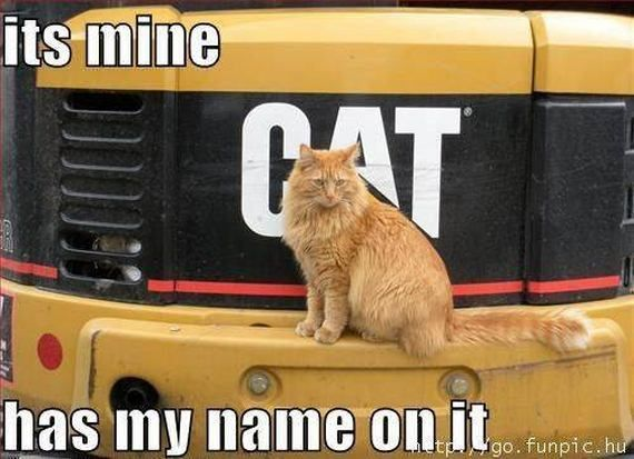 caterpillar+cat+pictures+with+captions | Funny Animal Pictures with Captions
