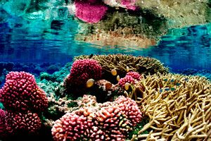 Why MPAs?    Marine protected areas are essential to safeguard biodiversity and to sustain vibrant seas.  Marine protected areas can increase biomass and biodiversity in tropical and temperate ecosystems, as well as serve as insurance policies against the impacts of fishing and other destructive activities. If managed properly, they are an effective way of protecting marine ecosystems along with their cultural and historical heritage for us and future generations.