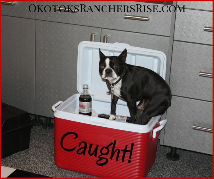 I've been caught red-handed! I swear I was only going to take one... at a time... ~Love Mickey http://rgn.bz/RHLy