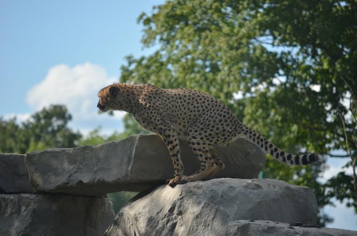 More Cheetah just before takeoff.