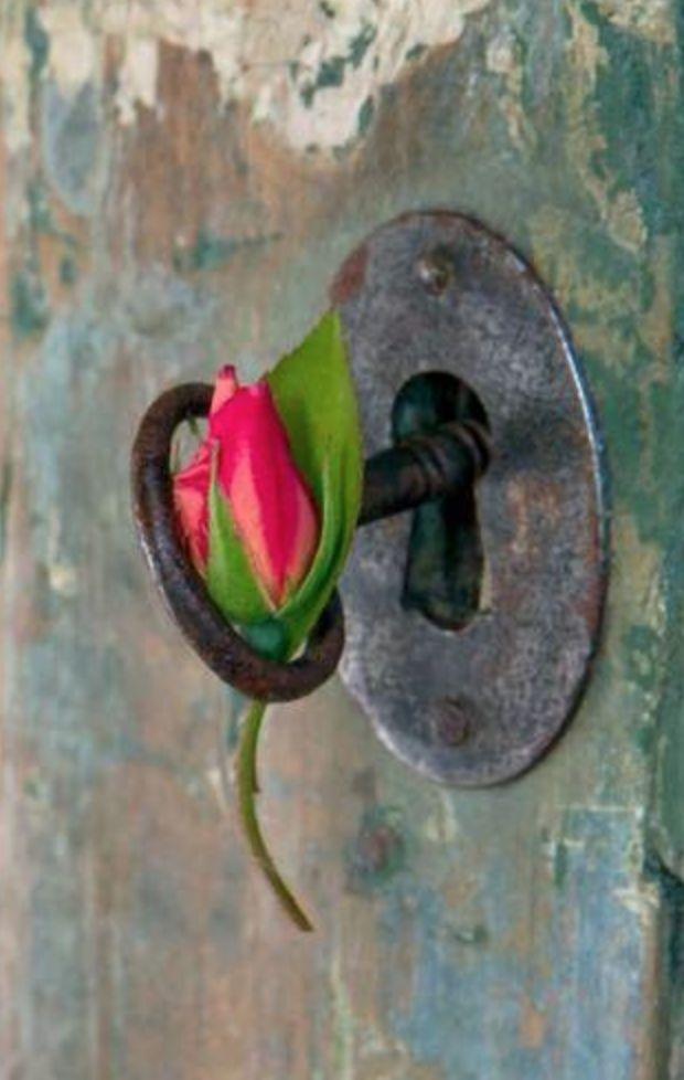 Ana Rosa - Rose bud