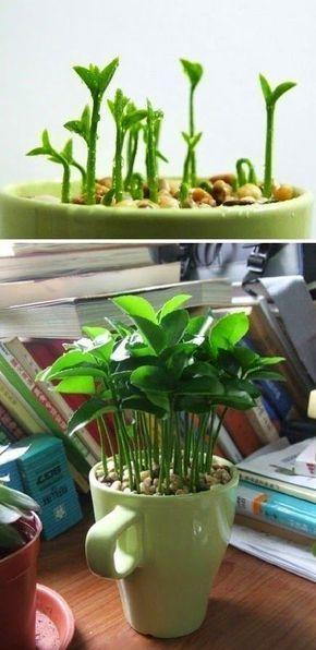 DIY: 10 Jolies plantes gratos pour l. a. maison. UPcycling, Be greeN, House candy Ho…