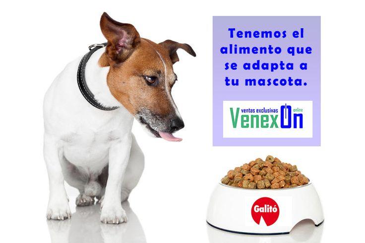 Tienes mascota? Sabe que en nuestra tienda online https://www.venexon.com/135-alimentacion- tenemos toda la gamma de productos de Galitó. Entra y encuentra el alimento que mejor se adapte a las necesidades de tu mascota. Si no lo encuentras contacta con nosotros y te asesoramos. -Alimento sin gluten para: Perros: ✔ Cachorros ✔ Adultos ✔ Seniors ✔ Sobrepeso ✔ Vegetarianos Gatos: ✔ Castrados ✔ Problemas urinarios. Y también y bajo petición tenemos alimentación para: -Gallinas, caballos…