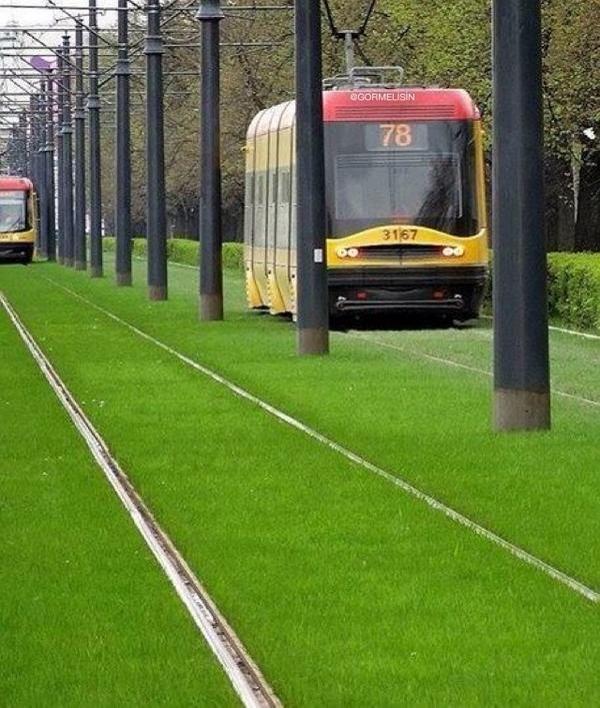 Polonya'da bir tramvay yolu. Doğayla uyumlaşma örneği!