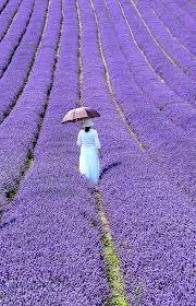 lavender field, woman with umbrella