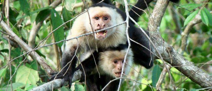 Palo Verde National Park in Guanacaste, Costa Rica, is the best place for observation of the Costa Rican wildlife in the Liberia, Papagayo Gulf & Tamarindo Beach areas.