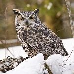 Muskoka Wildlife Centre    Gravenhurst, Ontario
