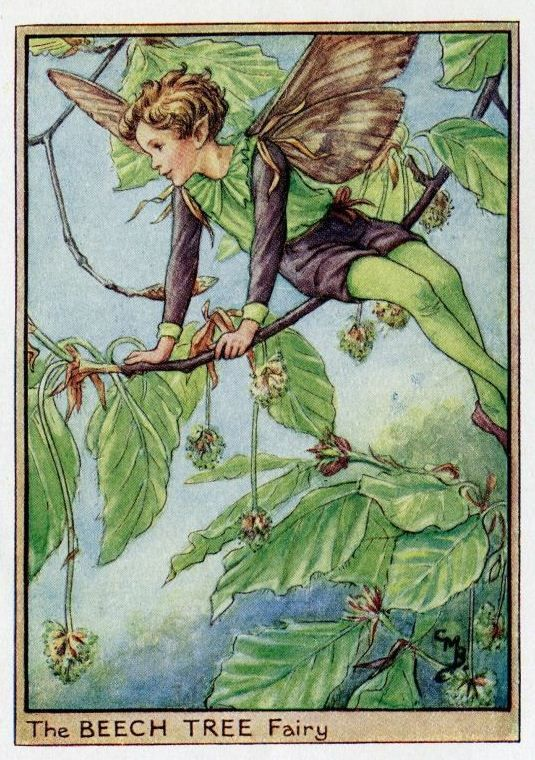Beech Tree Flower Fairy Vintage Print, c.1950 Cicely Mary Barker Book Plate Illustration