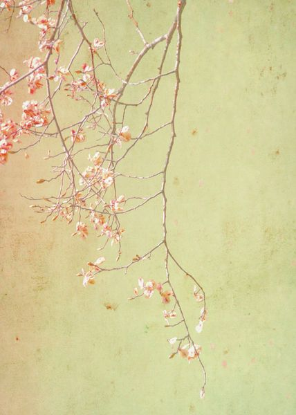 'Pink Branch' by artskratches on artflakes.com as poster or art print $22.17