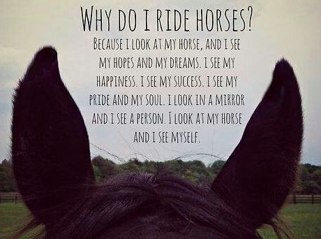 Image result for horse riding quotes