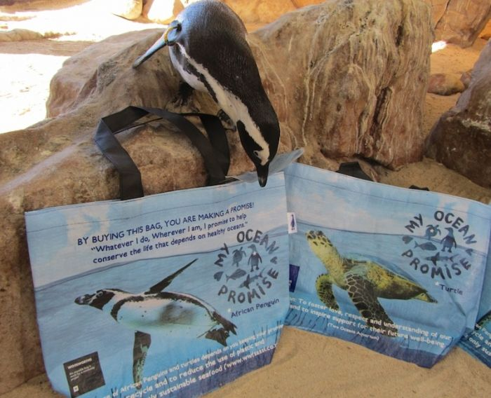 A resident African penguin checks out the Woolworths reusable bags