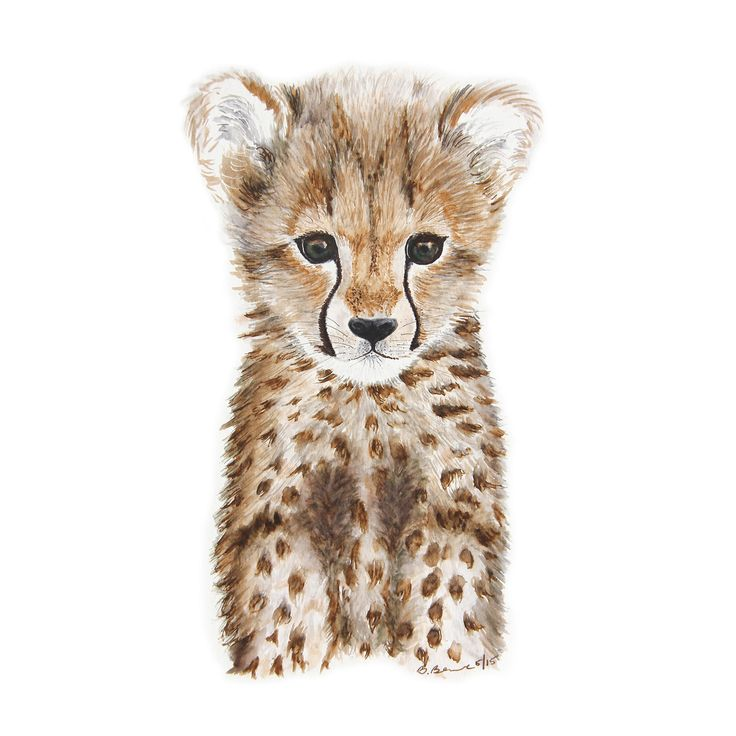 Baby Cheetah Portrait                                                                                                                                                                                 Mais