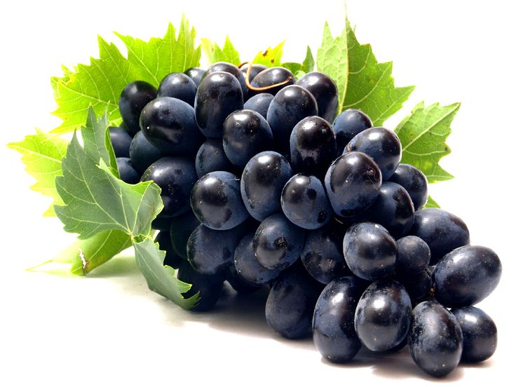 grapes wine hd wallpapers - photo #37