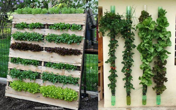 Här är 12 bra idéer hur du kan odla på höjden om du har en balkong eller en liten trädgård.