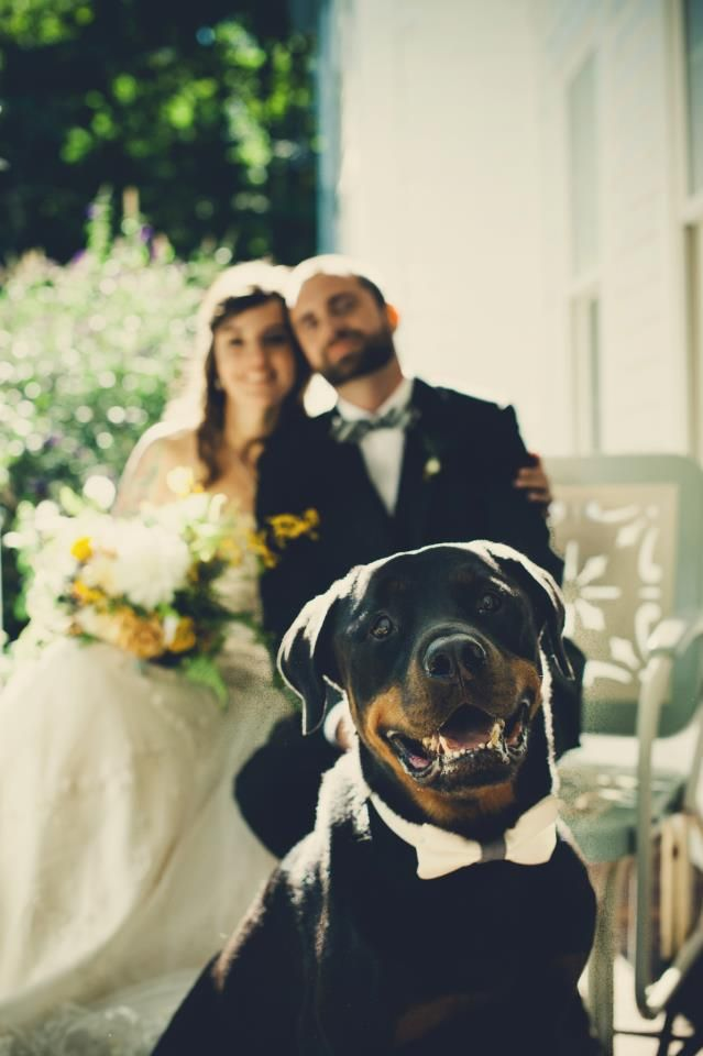 """Click visit site and Check out Best """"Rottweiler"""" T-shirts. This website is…"""