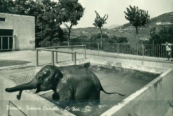 Interno del Castello - Lo zoo - L'elefante http://www.bresciavintage.it/brescia-antica/cartoline/interno-del-castello-lo-zoo-lelefante/