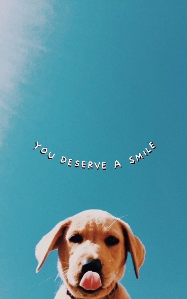 U Deserve A Smile Hintergrundbilderiphone Deserve Hintergrundbilderiphone Smile Wallpaper Estetika Wallpaper Iphone Lucu Anjing Best wallpapers cute dogs