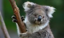 Healesville sanctuary - Must do!