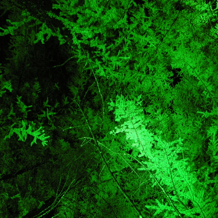 NIGHT FOREST GREEN