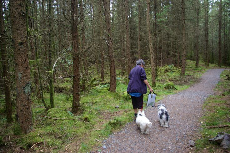2013 - Forest Walk, Near Garlieston, Dumfries and Galloway. Mickey decided to go into a mire, he was black from head to toe.
