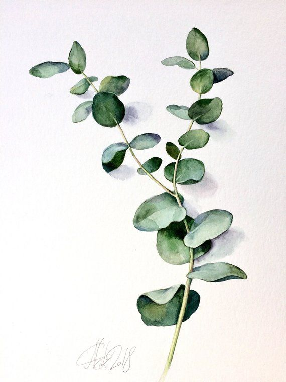 original watercolor silver dollar eucalyptus painting green leaf botanical art plant