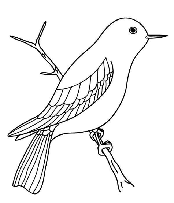 Kuş Resmi Boyama Sayfası Gazetesujin