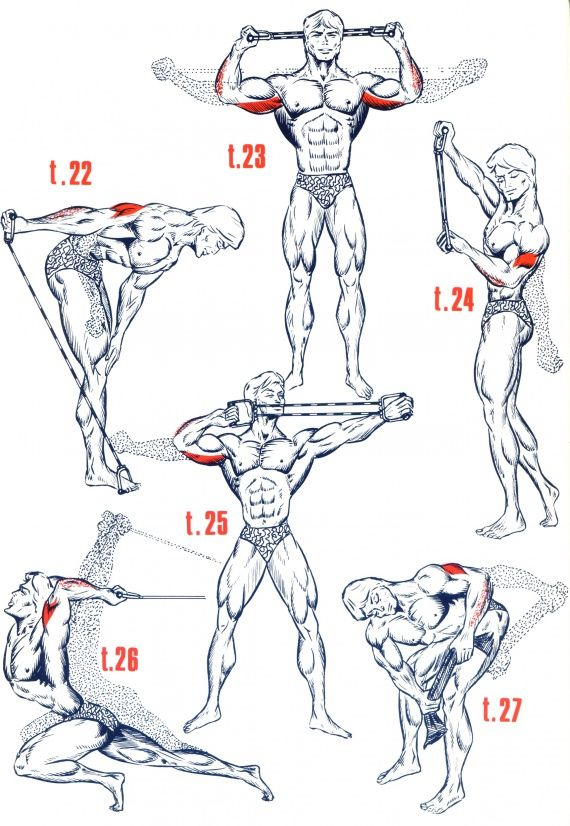 Triceps5                                                       …