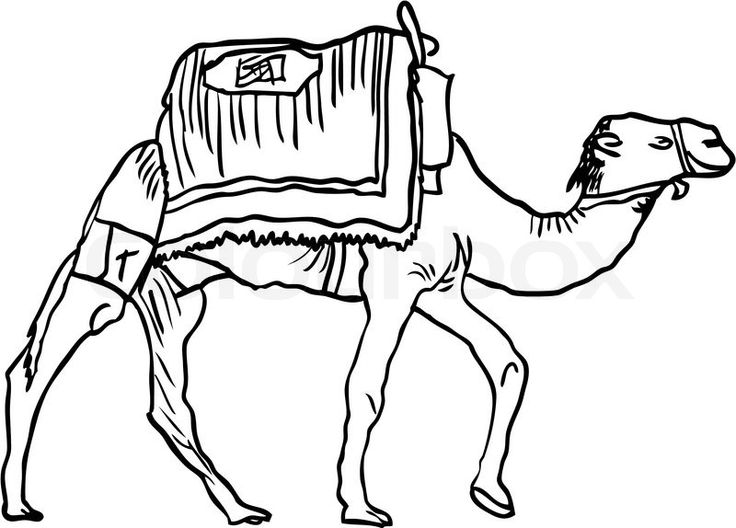 2931995-camel-in-black-isolated-on-the-white-