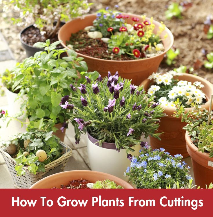 Growing #plants from cuttings will breath new life into your garden this #summer