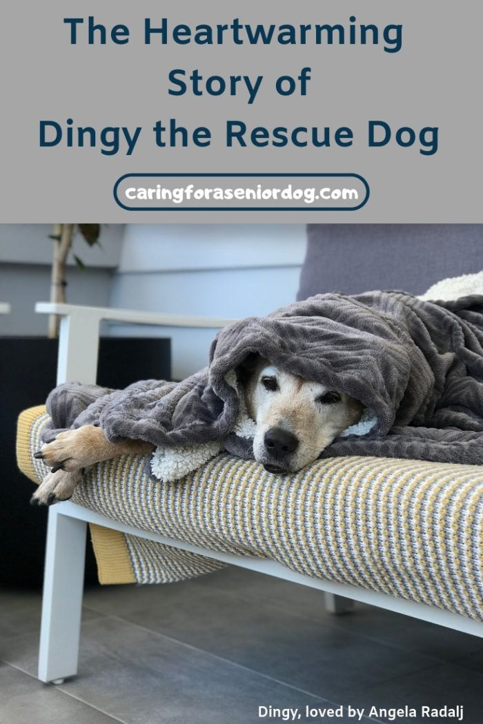 The Heartwarming Story Of Dingy The Rescue Dog Caring For A Senior Dog Rescue Dogs Dog Care Pet Sitters International